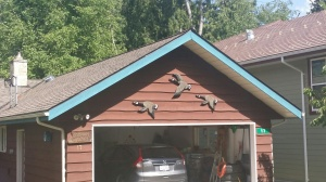 Gough Roof (3)